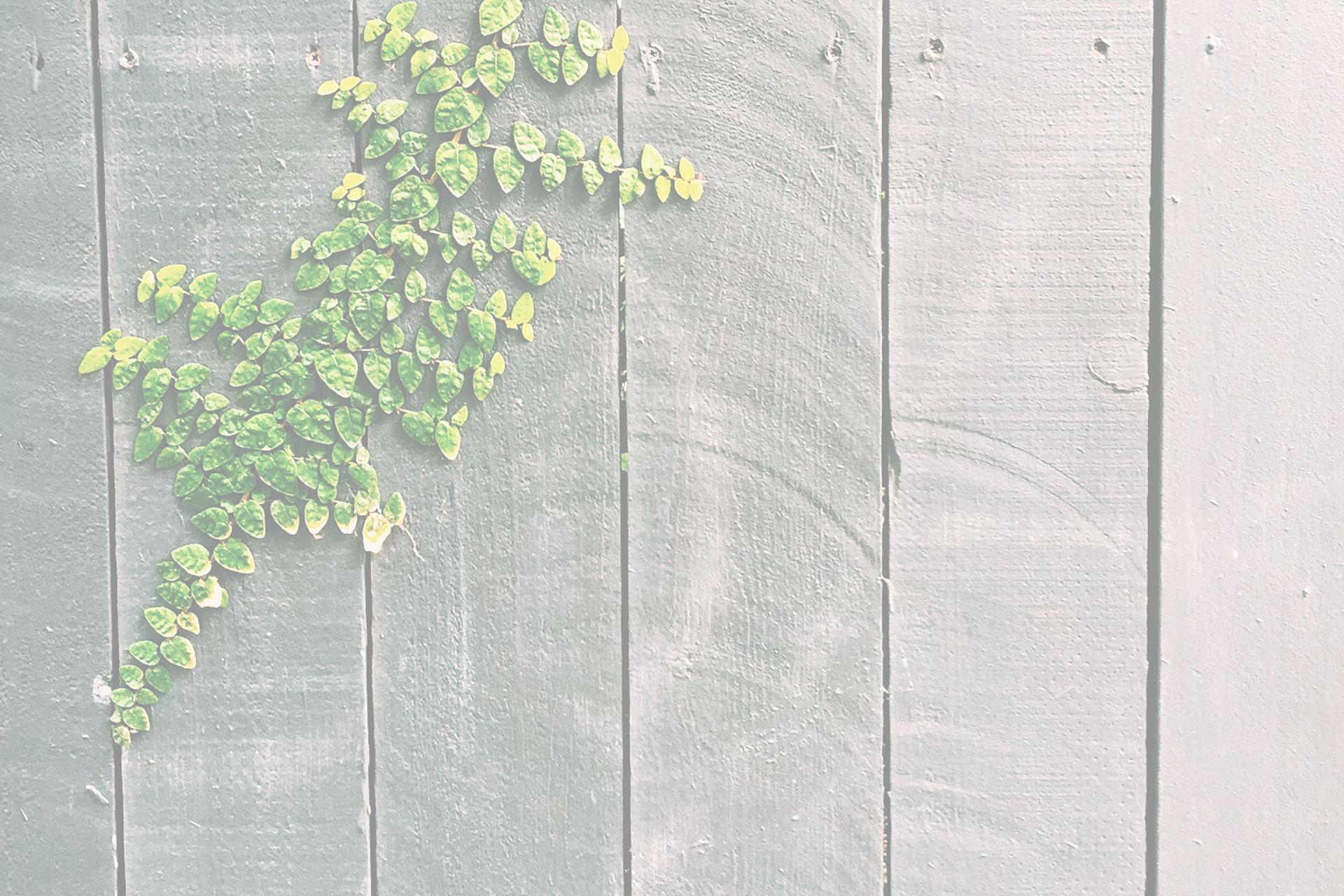 springfencewhite2 – SuttonBio.com